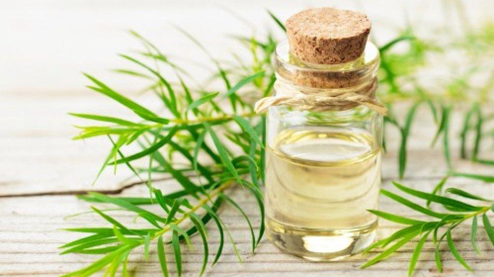 Zim's Ingredients: Tea Tree Oil